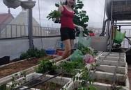 Sân thượng 80m² như một trang trại thu nhỏ của bà mẹ trẻ ở Hải Phòng vì cái gì cũng có