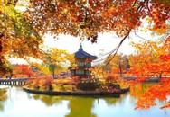 Những địa điểm ngắm lá đỏ đẹp nhất tại Nhật Bản, Hàn Quốc mùa thu này