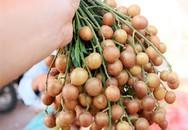 """Chuyên gia tiết lộ: Thứ """"quả vàng"""" mùa hè là vị thuốc rất quý nhiều người đang để phí"""