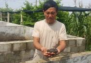 Lão nông U60 bỏ túi hàng chục triệu đồng/tháng nhờ nuôi ếch