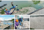 Hà Nội: Hé lộ nguyên nhân khiến hàng chục tấn cá chết ở Hồ Tây