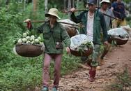 Na Lạng Sơn vào vụ, quả đẹp bán giá từ 50.000-70.000 đồng/kg