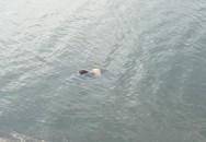 Hà Nội: Chưa xác định được danh tính của cô gái chết tại hồ Linh Đàm