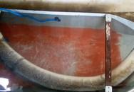 Ngư dân Nghệ An bắt được cá lệch khủng 16kg giá gần 1 triệu đồng/1kg