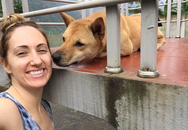 Người phụ nữ Mỹ hứa thưởng 50 triệu cho ai tìm được chú chó mất tích