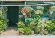 Giữa thành phố Long Xuyên (An Giang) có một ngôi nhà xanh mát và bình yên đến mức khiến ai cũng phải ao ước