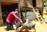 Cậu bé nghèo được lắp chân giả sau 17 năm bò bằng đầu gối