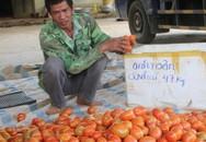 Anh nông dân thu nhập 400 triệu/năm chỉ từ trồng rau