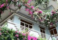Ngẩn ngơ ngôi nhà 3 tầng ngập sắc hoa giấy Singapore của người đàn ông yêu hoa ở Quảng Ngãi