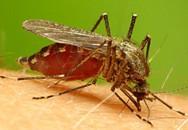 Những phương pháp mới phát hiện bệnh sốt rét