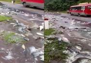 Xe tải chở cá gặp nạn, hàng tấn cá 'bơi' trên quốc lộ 6