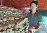 """8X """"bỏ túi"""" 200 triệu đồng mỗi năm từ trồng nấm"""