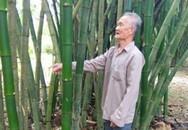 Cụ ông trồng tre dọc con đường của xã mà lời 80 triệu