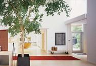 Thiết kế lối vào nhà hiện đại dễ dàng gây ấn tượng với khách đến chơi