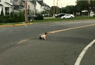 Bé 10 tháng tuổi 'trốn nhà', bò ra giữa đường ôtô