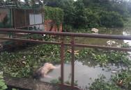 Cần thủ bỏ chạy khi thấy thi thể nam giới không mặc đồ trôi trên sông Sài Gòn