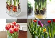 Sở hữu bình hoa Tulip cực đẹp vào dịp Tết bằng cách trồng từ nước đơn giản như này