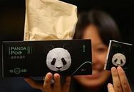 Giấy ăn làm từ phân gấu đắt gấp 10 lần giấy ăn thường