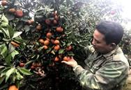 Bỏ phố thị về cuốc đồi: Anh nông dân đón Tết hơn 3 tỷ đồng