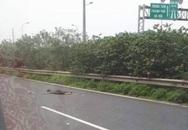 Người đàn ông nhặt rác bị ô tô tông tử vong trên đại lộ Thăng Long