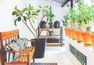 Cặp vợ chồng cải tạo cửa hàng cũ thành nhà ở đẹp như resort