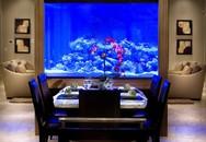 Bể cá được lồng ghép vào nội thất ngôi nhà: Xu hướng trang trí thịnh hành nhất hiện nay