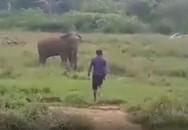 Cố thôi miên voi hoang dã, người đàn ông bị quật chết