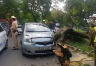 Hà Nội: Đang đi trên đường Thanh Niên, xe ô tô bị cây xanh đổ đè trúng