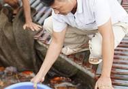 Anh bán cá Koi thành triệu phú sau 3 lần mất trắng