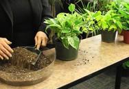 Chuyên gia hướng dẫn các cách đơn giản giảm nhanh, loại bỏ ô nhiễm không khí trong nhà