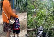Hà Nội: Mẹ chở con gái đi học bất ngờ bị cành cây rớt xuống đè trúng xe, may mắn thoát chết