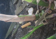 Mạnh tay xử phạt nhà hàng, khách sạn vi phạm quy định cấm hút thuốc nơi công cộng