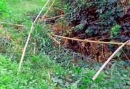 Phát hiện thi thể không nguyên vẹn trong bụi rậm