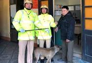 Quảng Ninh: Trên đường tuần tra, cảnh sát giao thông bắt được đối tượng trộm chó