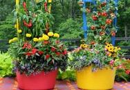 Mẹo thiết kế vườn rau xinh xắn mặc không gian nhỏ hẹp