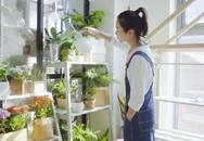 Chỉ vài thao tác, cô gái trẻ đã có thể tự tạo một vườn rau gia vị xanh tốt trong bếp