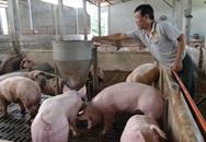 """Giá thịt lợn tăng là do người chăn nuôi """"găm"""" hàng?"""