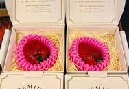 Nửa triệu đồng một quả dâu tây Nhật làm quà Valentine