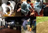 Phát hiện 2 ổ dịch tả lợn châu Phi tại Việt Nam