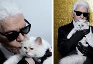 Mèo cưng của Karl Lagerfeld trở thành mèo giàu nhất thế giới với tài sản 3,4 triệu đô