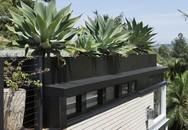 Ngôi nhà có mái phủ đầy cây xanh