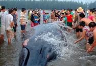 Hai con cá voi dạt vào bờ biển ngày mùng 3 Tết