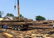 Lái xe bị hàng tấn gỗ tràn xuống đè tử vong