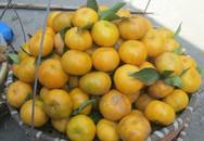 Mách các bà các mẹ cách phân biệt quýt siêu ngọt quả nhỏ của Việt Nam và Trung Quốc