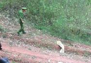 Người phụ nữ tử vong bất thường trong vườn cam gia đình