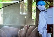 Nghệ An: Đã xuất hiện một ổ dịch tả lợn Châu Phi