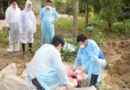 """FAO """"hiến kế"""" cho Việt Nam trong việc ứng phó với dịch tả lợn châu Phi"""