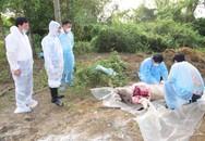 Lai Châu tiếp tục phát hiện thêm ổ dịch tả lợn châu Phi