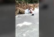 Bị rắn cắn chết khi đang tạo dáng chụp ảnh