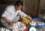 Giá trứng còn 1.000 đ/quả, nông dân lỗ tiền triệu/ngày sau Tết